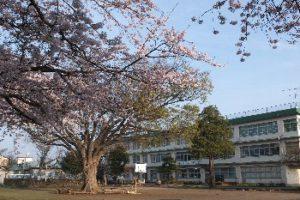 けやきの木(春)