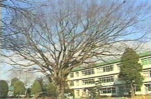 けやきの木(冬)