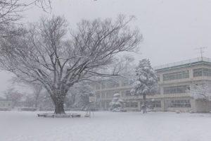 雪の中のけやきの木