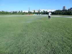 芝生整備の様子
