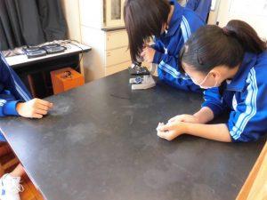 3年生が玉ねぎの細胞をみていました。