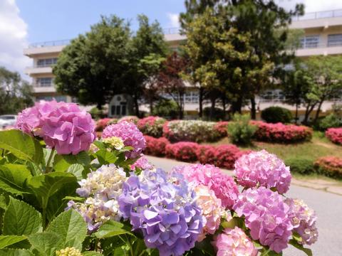 写真:大和田中学校の校舎